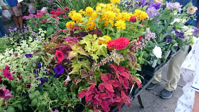 Flowers at City Market stock photo