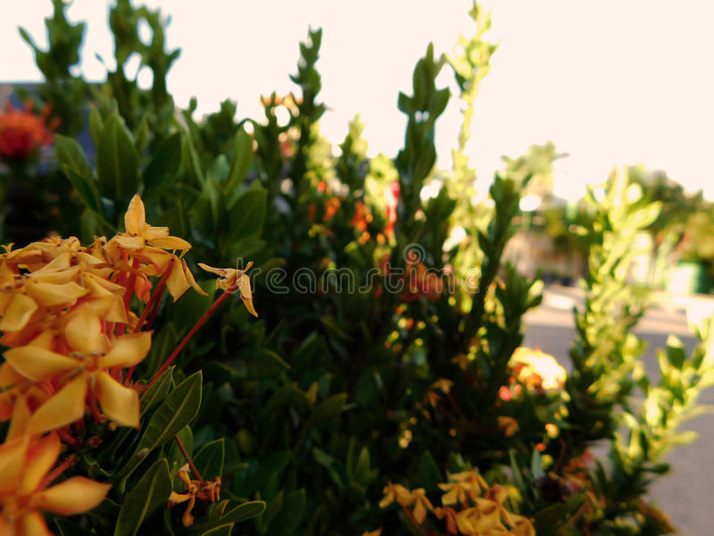 Flowers on the city. Photo of Flowers on the city royalty free stock images