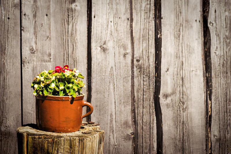 Flowers in clay pot. On wooden background stock photo