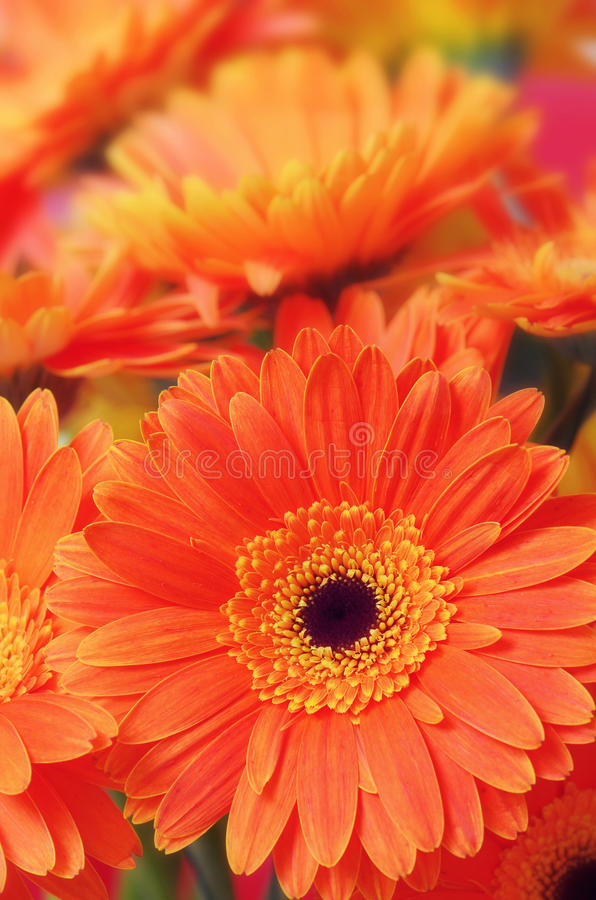 Free Flowers Close-up Stock Image - 32368131