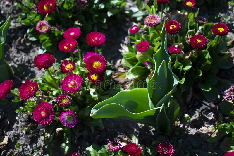 Close up of flowers in the park. royalty free stock image