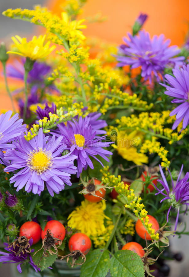 Download Flowers stock photo. Image of autumn, fall, fruit, rosehip - 33863060