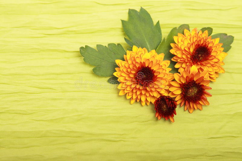 Download Flowers on cloth stock photo. Image of green, flora, close - 12010652