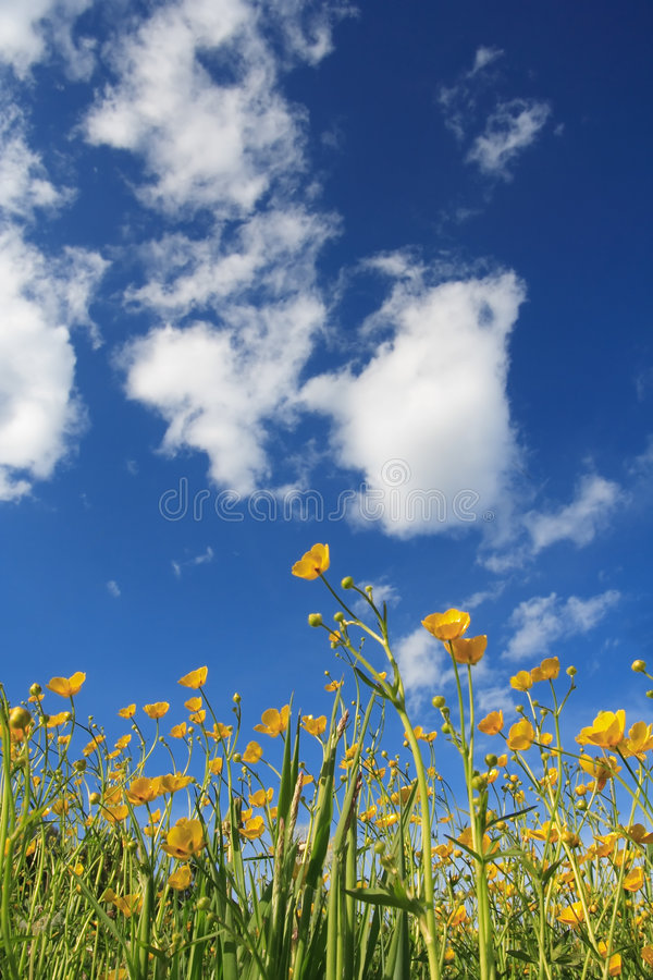 Flowers and clouds royalty free stock photos