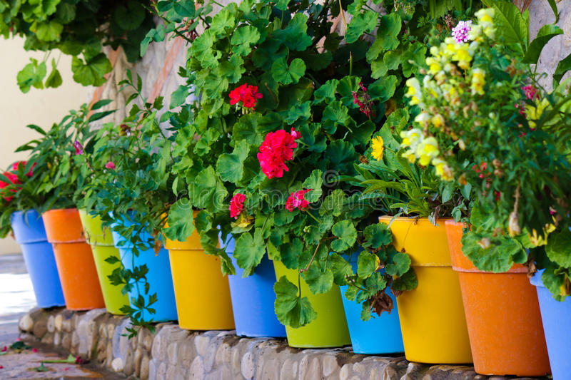 Flowers in colorful pots. Near the wall royalty free stock images