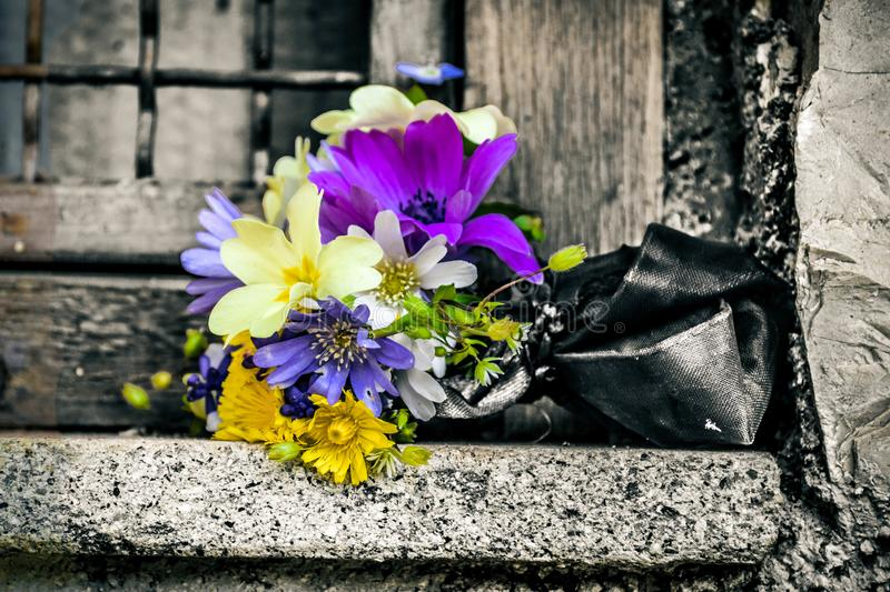 Flowers and colors royalty free stock photos