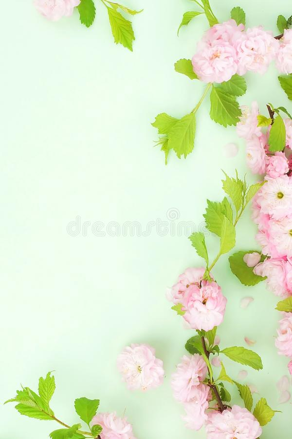 Flowers composition background. beautiful pink sakura flowers on pale green background stock photos