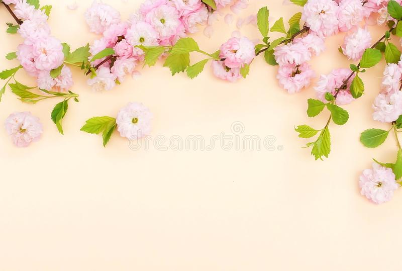 Flowers composition background. beautiful pink sakura flowers on pale orange background stock photos