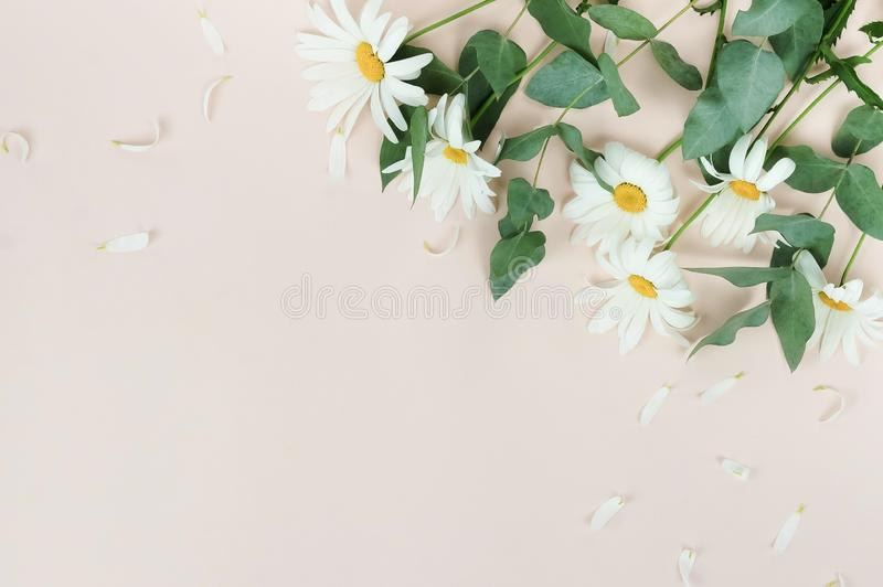 Flowers composition background. bouquet of flowers camomiles on pale beige background. stock image