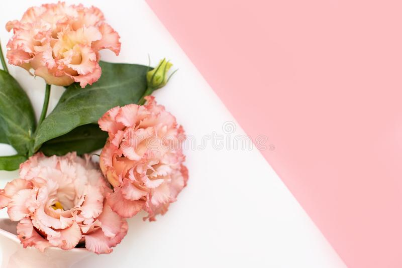 Flowers composition background . Pink flowers azalea pattern on white background. Top view. Copy space. Holiday concept stock photo