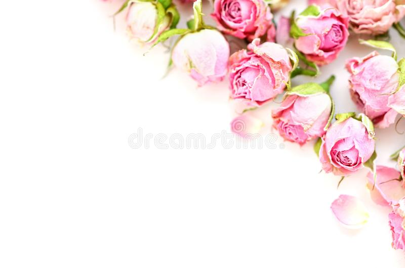 Flowers composition. Frame made of dried rose flowers on white background. royalty free stock images