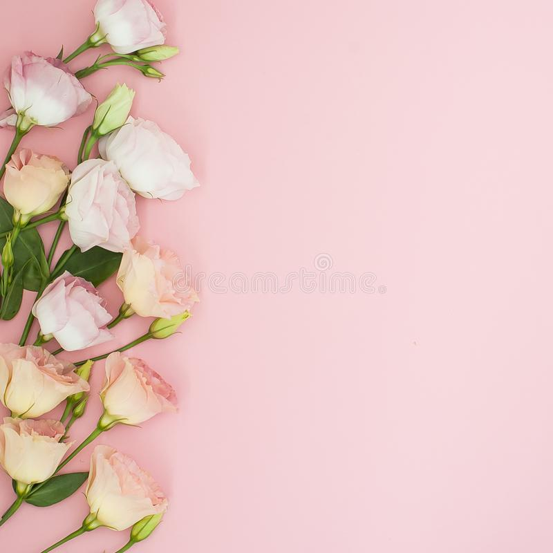Flowers composition. Frame made of pink rose flowers. Flat lay, top view, copy space royalty free stock image