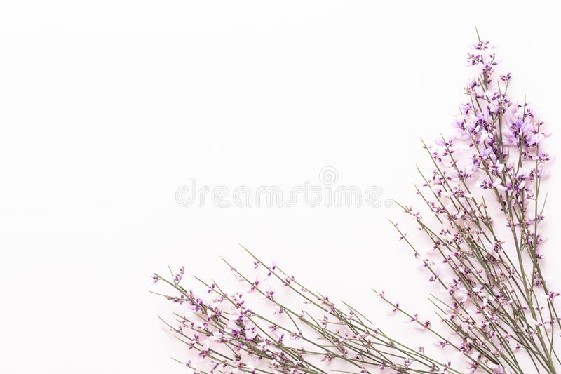 Flowers composition. Pink flowers on pink background. Easter, spring concept. Greeting card stock photo