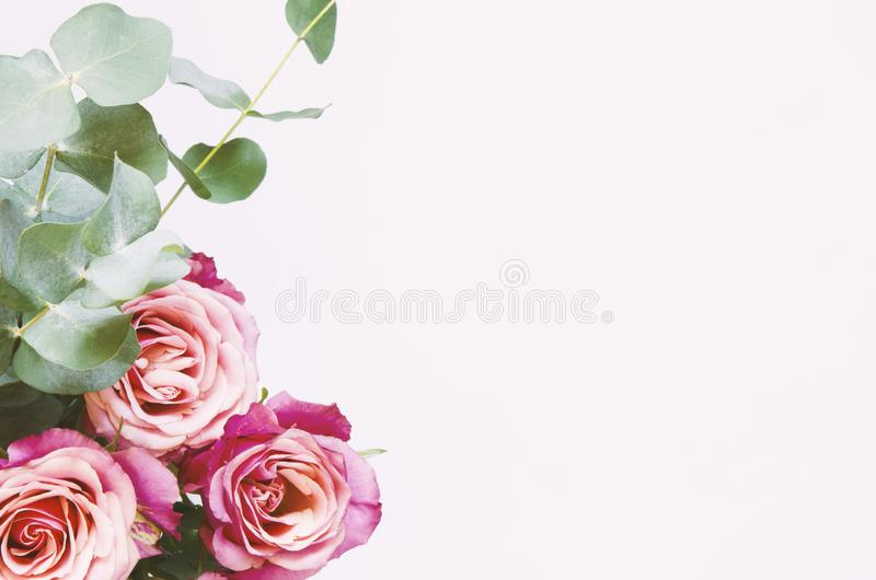 Flowers composition. Roses flowers and branch eucalyptus on white background. stock photography