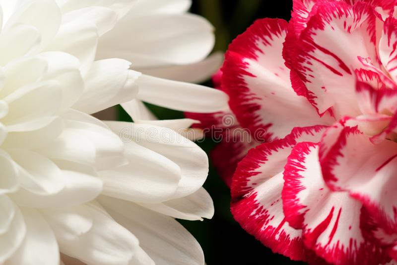 Download Flowers contrast stock photo. Image of vibrant, plant - 10246536