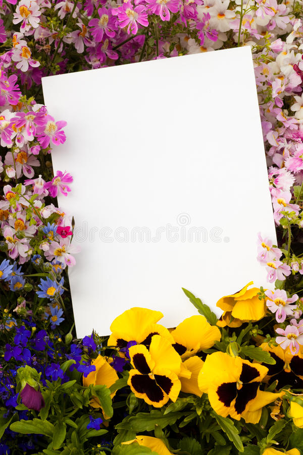 Flowers and Copyspace royalty free stock image