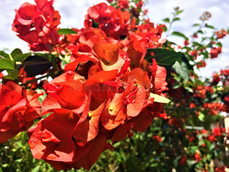 Flowers of country gardens royalty free stock images