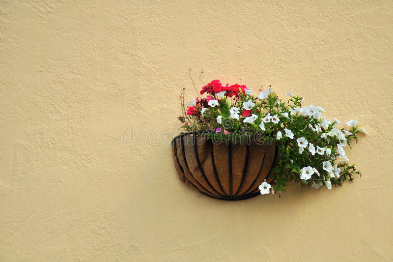 Flowers on cream wall. Flowers in decorative flowerpot on yellow-cream background of a wall with texture stock image