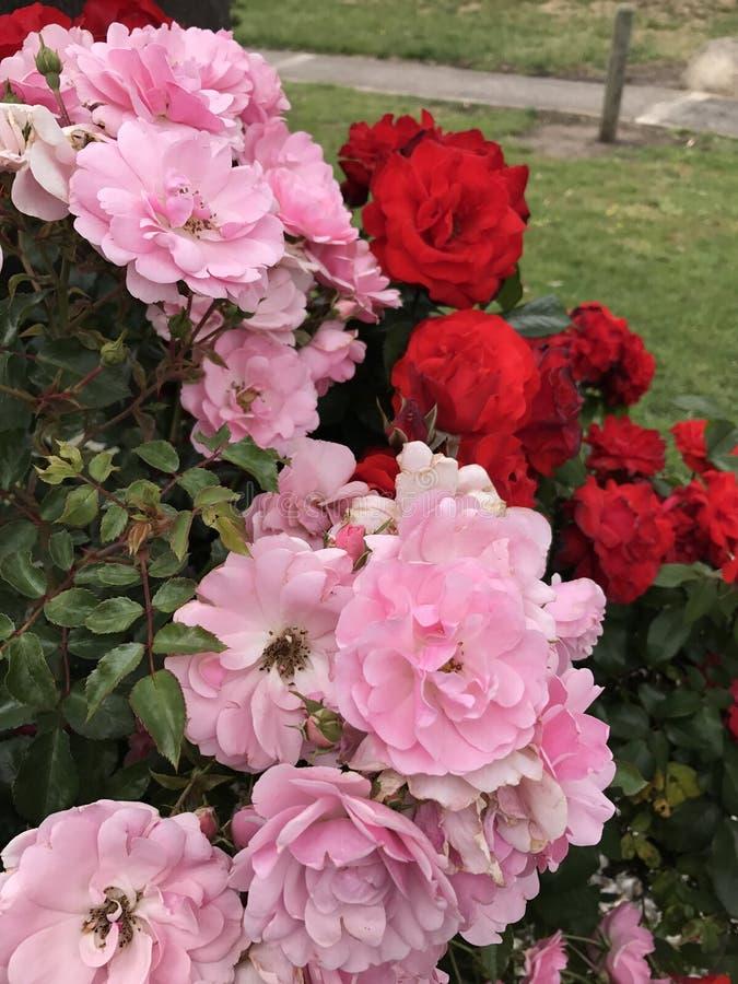 Flowers stock image