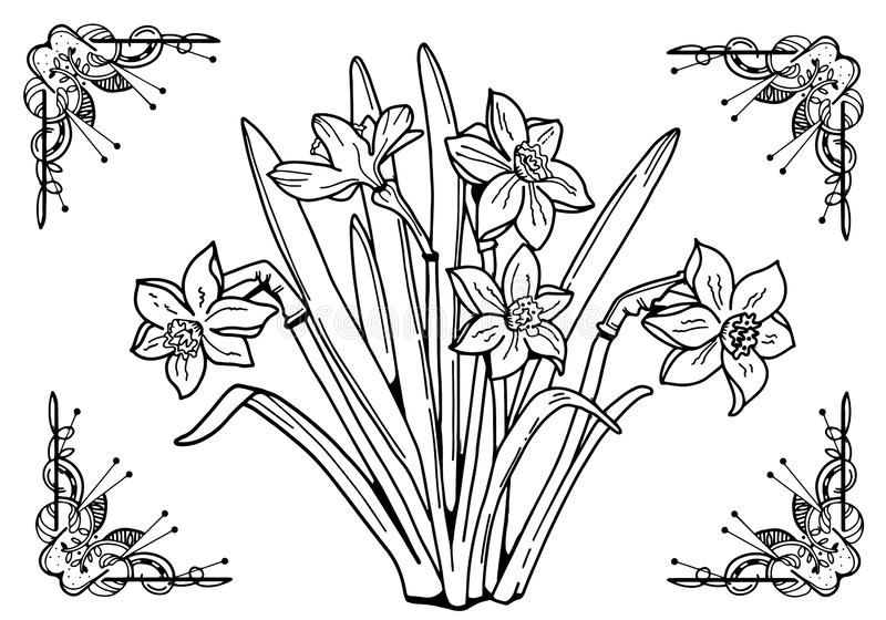 Flowers Daffodils Black and white image in the frame. Coloring for adults. Line art drawig stock illustration