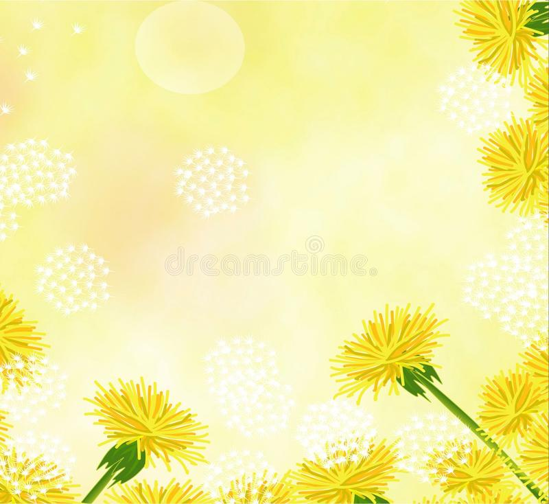 Flowers, dandelions, pale, beautiful, beautiful background for cards and business cards royalty free stock images