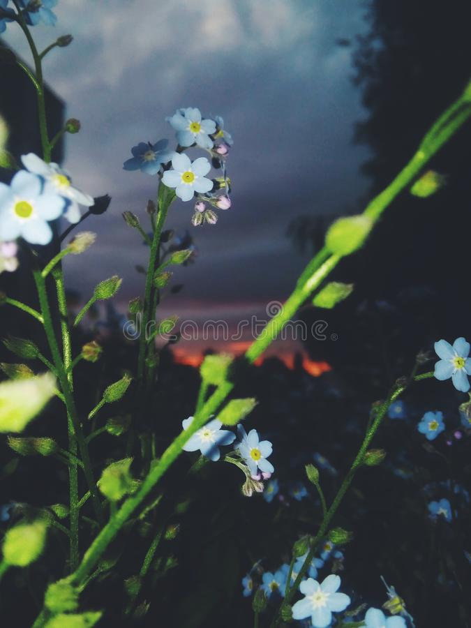 Flowers at the dawn of the day stock photo