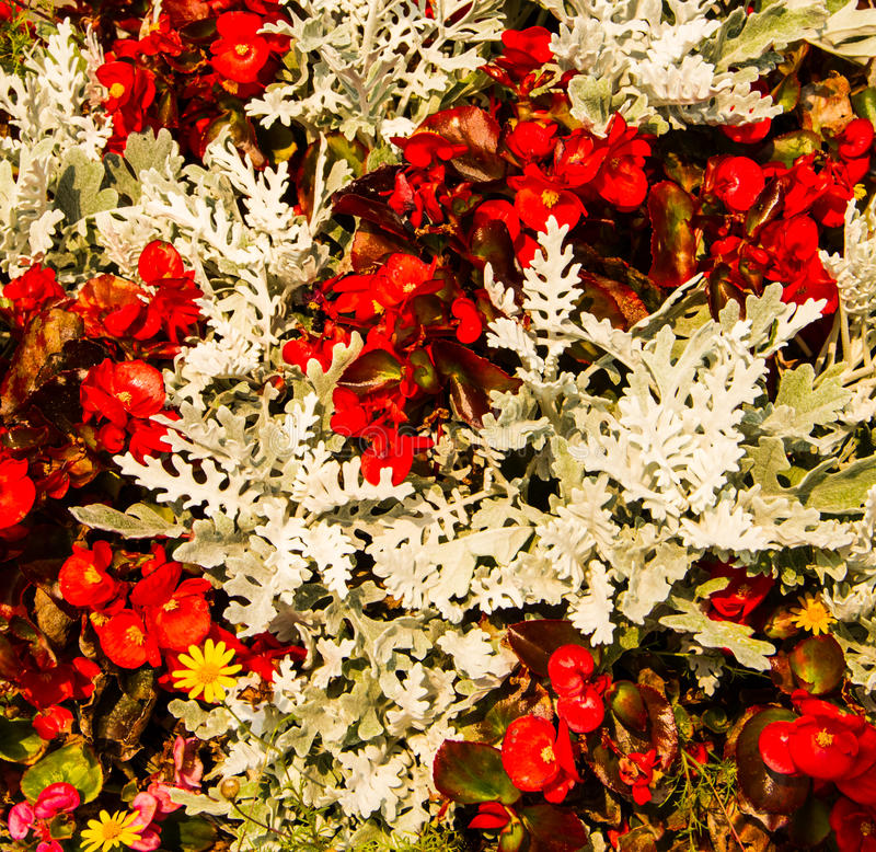 Download Flowers decoration stock photo. Image of floral, fresh - 39512128