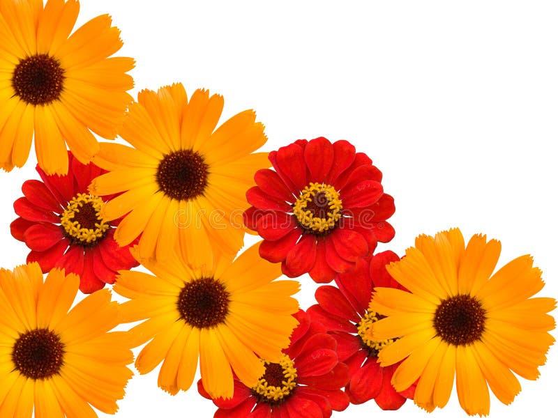 Flowers decorative stock photo