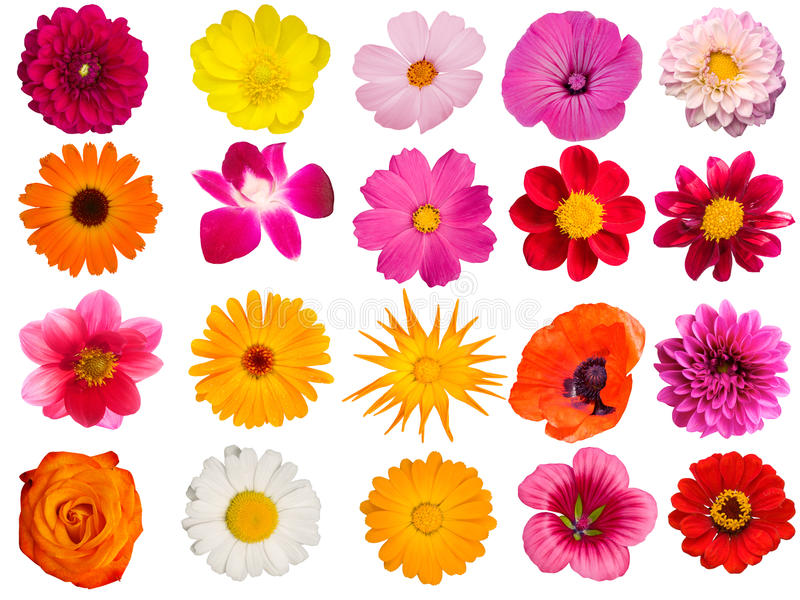Flowers decorative collection stock photography