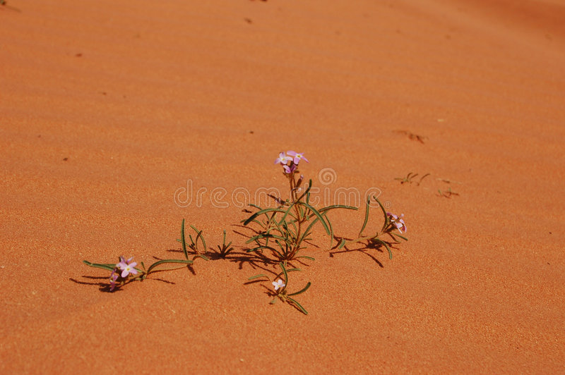 Flowers in the desert royalty free stock photo