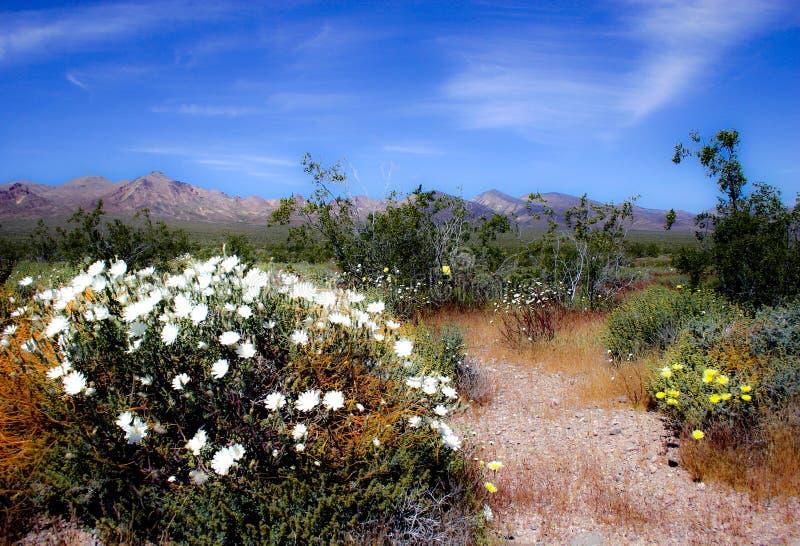 Flowers in the desert stock images