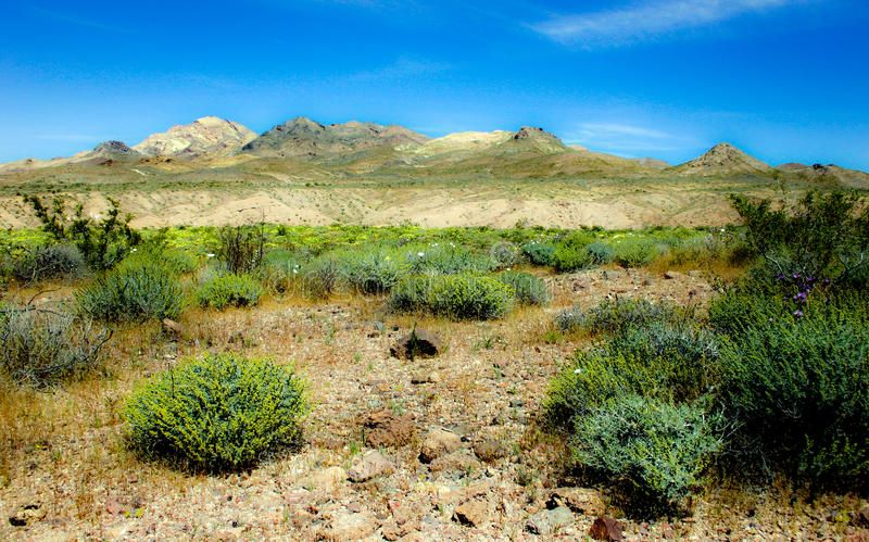 Flowers and Desert royalty free stock images