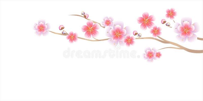Flowers design. Branch of Sakura isolated on white background. Apple-tree flowers. Cherry blossom. Vector EPS 10 cmyk royalty free stock images