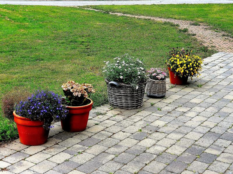 Flowers in different urns in order to row stock photography