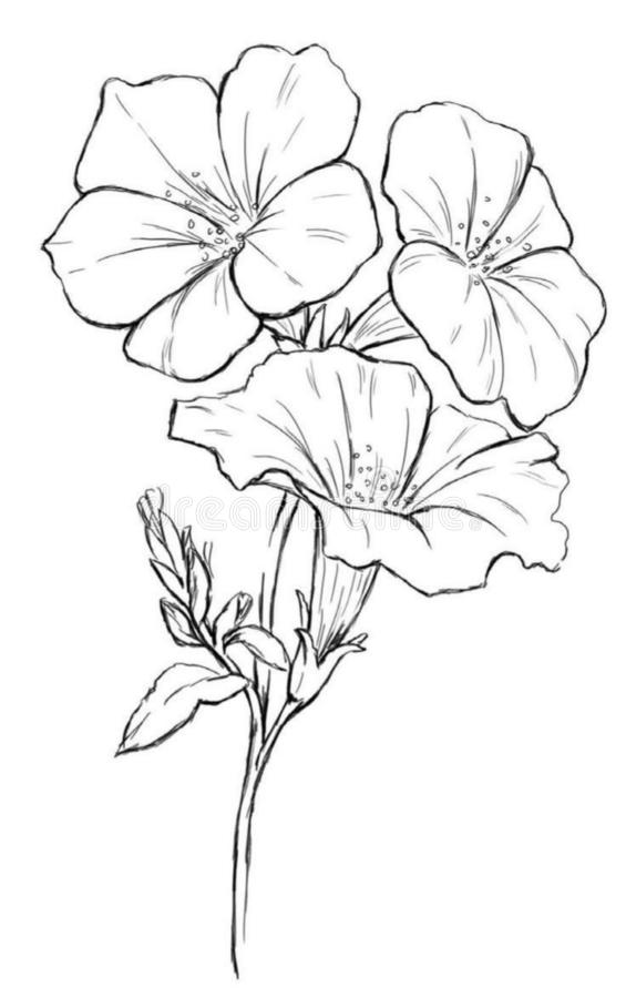 Flowers drawing with line-art on white backgrounds. royalty free illustration