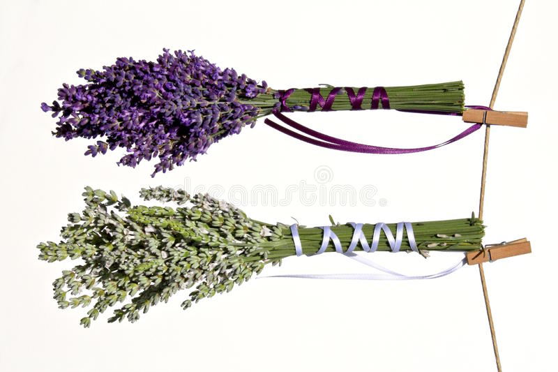 Free Flowers Drying On Clothesline Stock Photo - 10329340