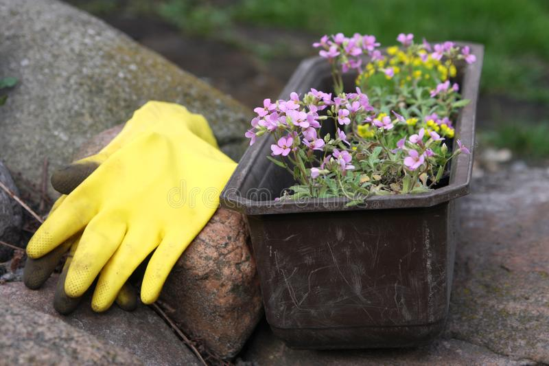 Flowers and equipment in garden stock photos