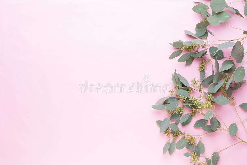 Flowers and eucalyptus composition. Pattern made of various colorful flowers on white background. Flat lay stiil life stock images