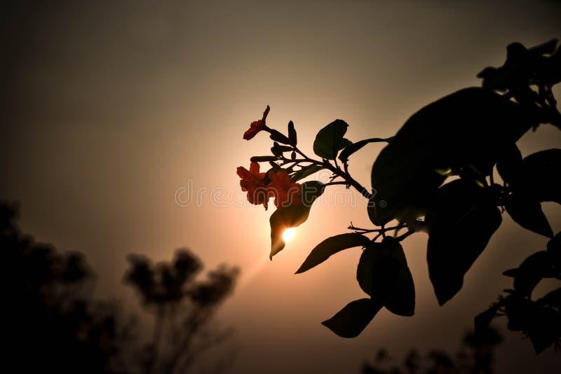 Flowers evening stock photo