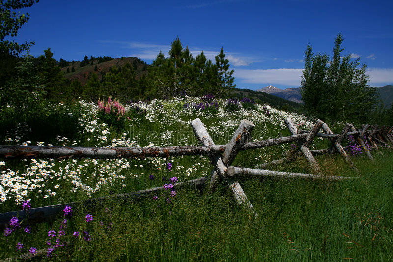 Flowers And Fence 2