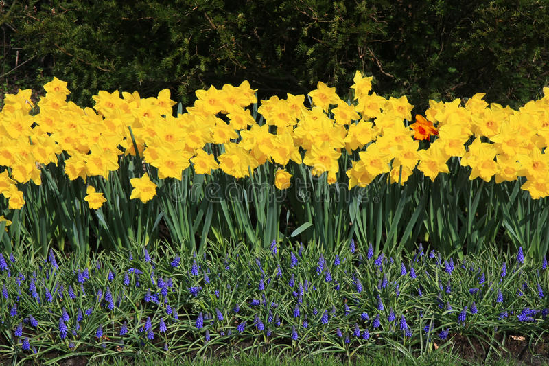 Download Flowers Fence stock image. Image of tree, yellow, purple - 27287327