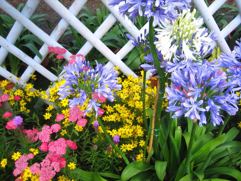 Download Flowers And Fence Stock Photography - Image: 6458272