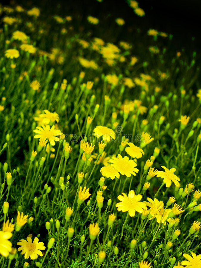 Flowers Field 04 stock photos