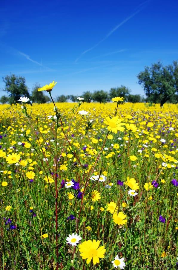 Flowers on field at alentejo region royalty free stock image