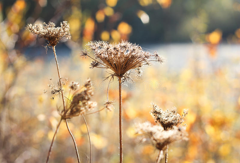 Flowers in the field. Autumn flowers in the evening field stock photography