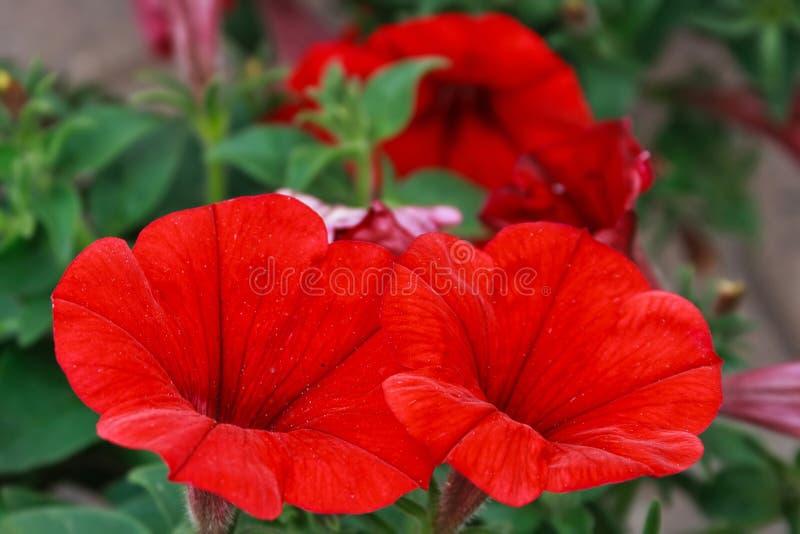 Flowers 13 Stock Image