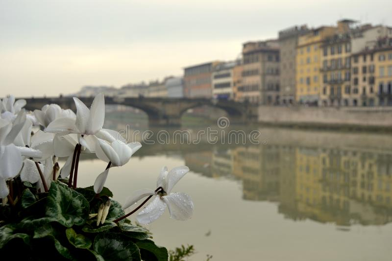 Flowers in Florence, Italy stock image