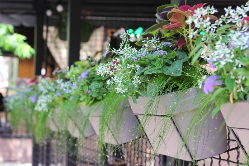 Flowers in flower pots in a row stock photo