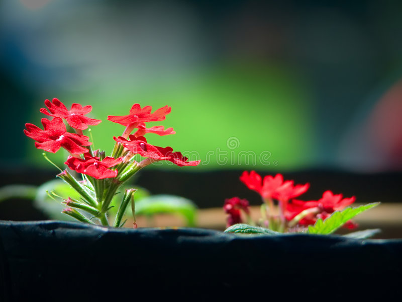 Flowers in a flowerpot royalty free stock photos