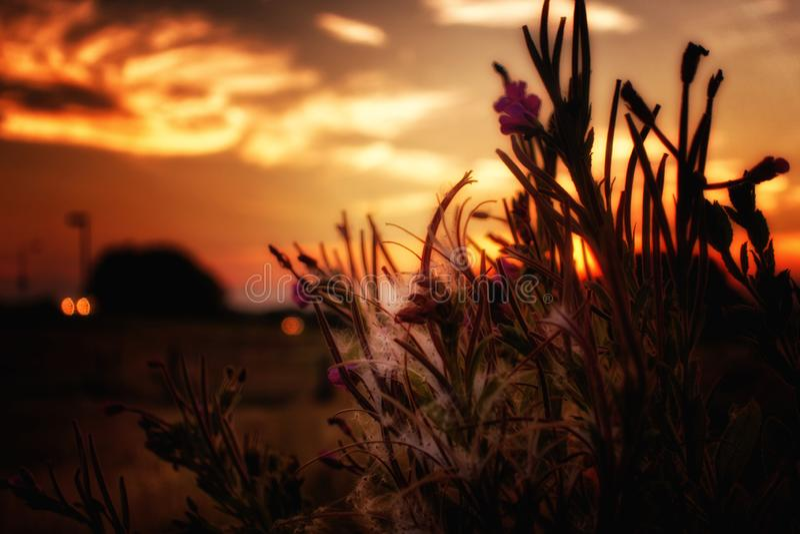 Flowers, Fluff And Sundown Free Public Domain Cc0 Image